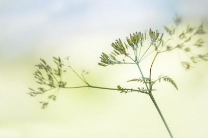 spring-2553979_960_720