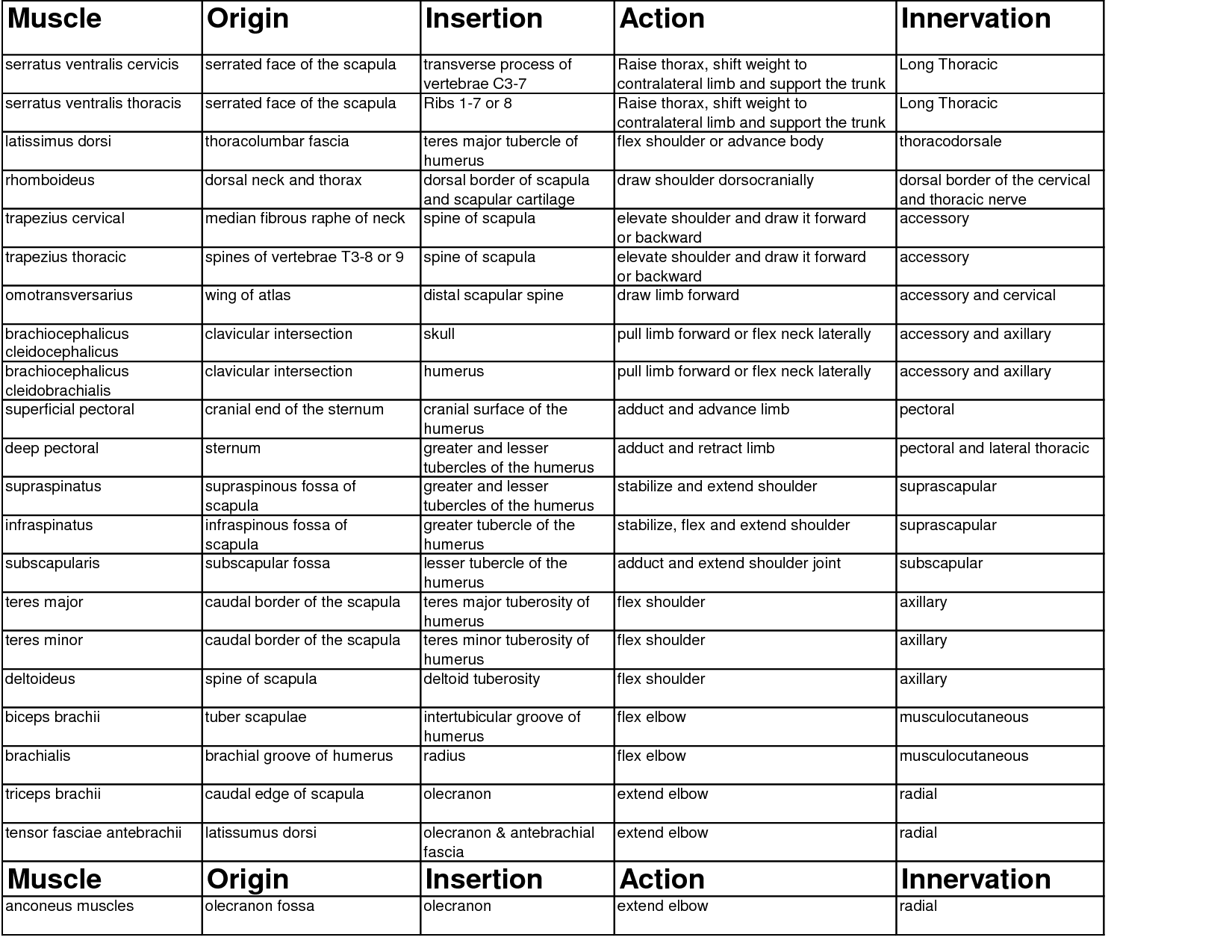 Muscle Origin Insertion Action Chart