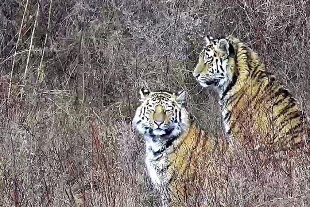 Павлик и Елена в Центре реабилитации тигров и других редких животных