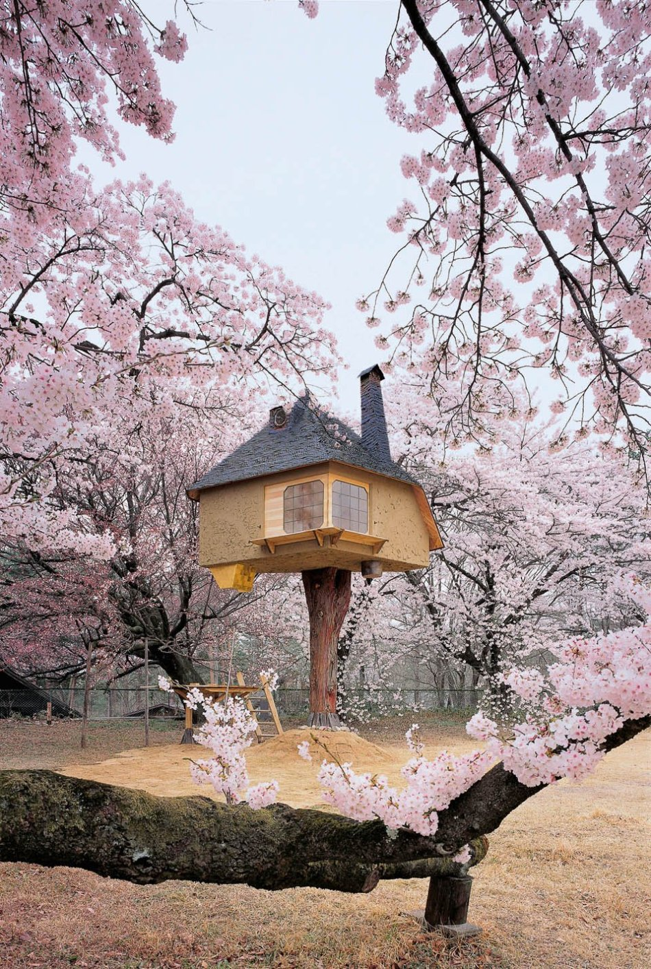 bu_tree_houses_473_1703281538_id_1120017