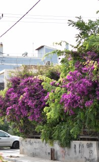 2017-06-07-Day-1-Greece-houseflower3
