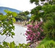 2017-06-07-Day-1-Greece-waterflower2