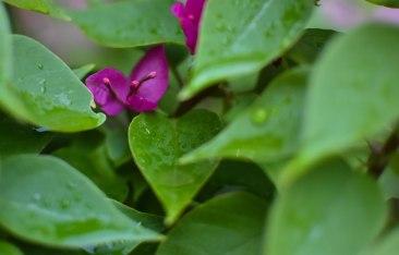 2017-06-08-Day-3-Artemis-flower8