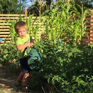 Tiny gardener