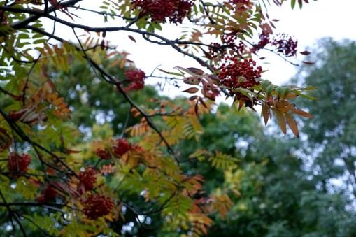 cardiff-autumn-amy-davies-012
