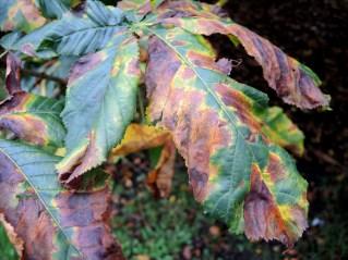 cardiff-autumn-amy-davies-023