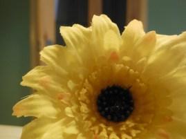 14062014-web-photo365