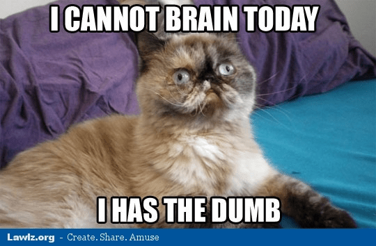 cat-meme-i-cannot-brain-today-dumb