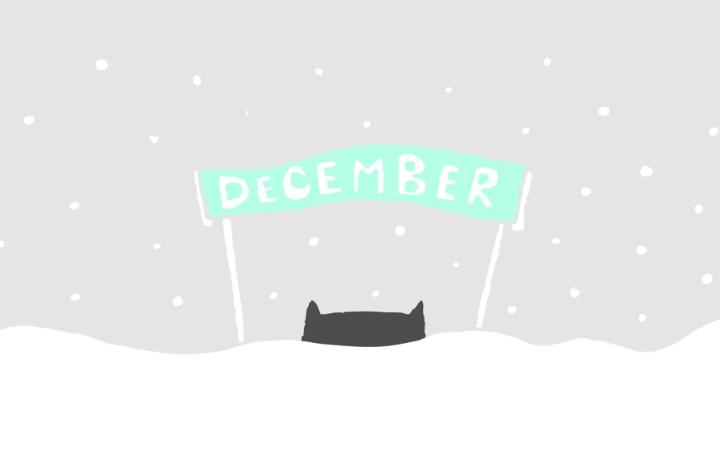 December kitten