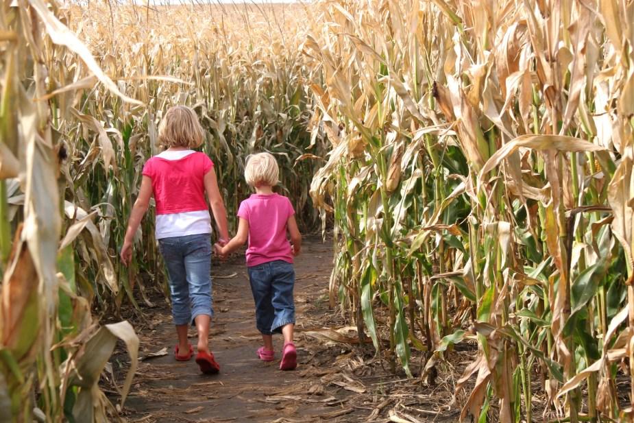 Corn Maze- socially distant fall bucket list