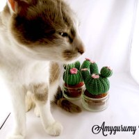 Crochet cutting cactus for trade