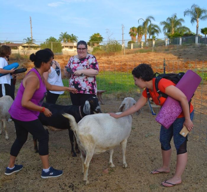 What the heck is goat yoga?! I had no idea, but I love yoga and I love animals - soooo, why not?! Here are all the details, I hope you will give it a try!