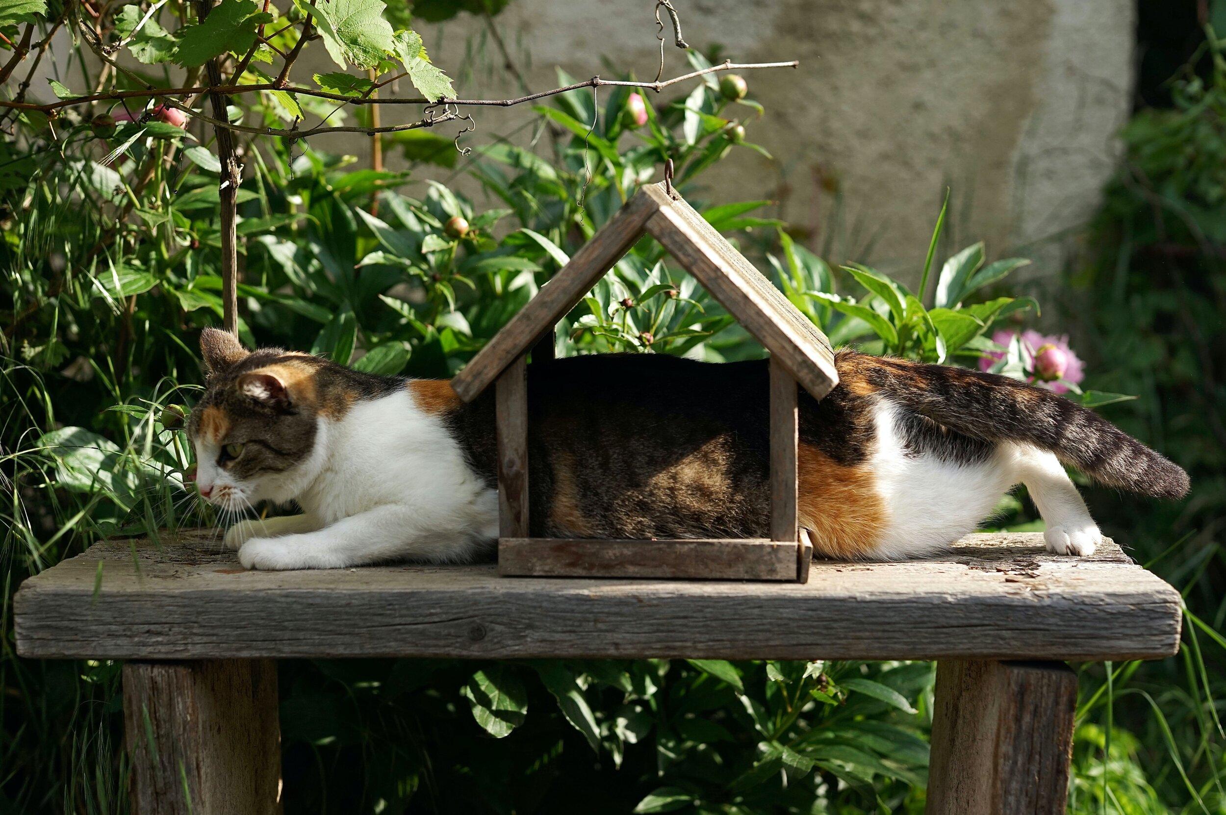 Amy Jean Blog - Petrichor? No, Stuck Poem - Cat stuck in bird feeder