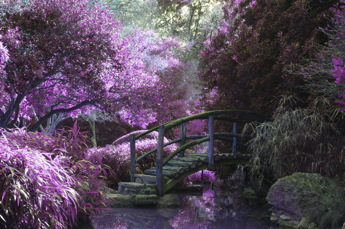 Amy Jean Blog - My Garden Poem - Purple Garden