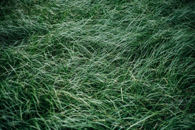 Amy Jean Blog - Things Great Poem - Waving Grass