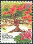 Flame-of-the-Forest-Delonix-regia