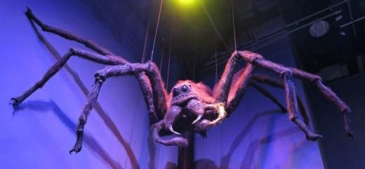 Aragog spider at Warner Bros. Studio Tour London: The Making of Harry Potter