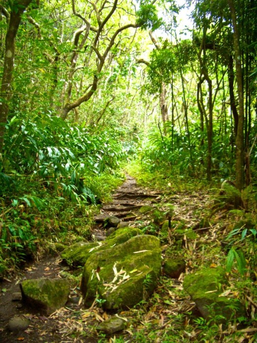 rainforest mossy stones_Maui0306A 151