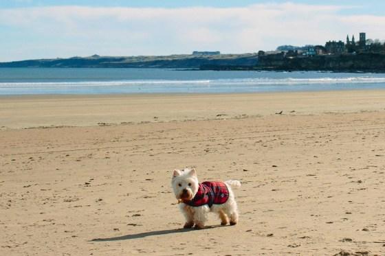 """Will Scotland's new """"ambassadog"""" be a Tartan Terrier, or perhaps a Loch Ness Labrador?"""