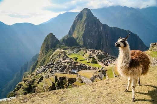 Llama in front of ancient inca town of Machu Picchu