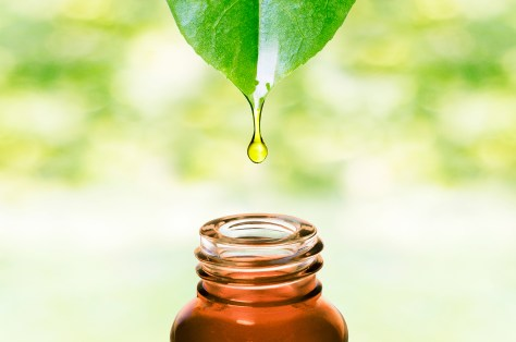 image of essential oils dripping from a leaf into a bottle