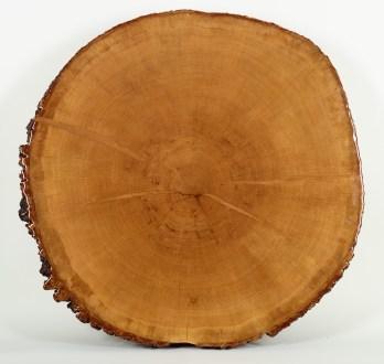 treecookie01