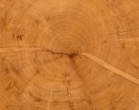 treecookiedetail12