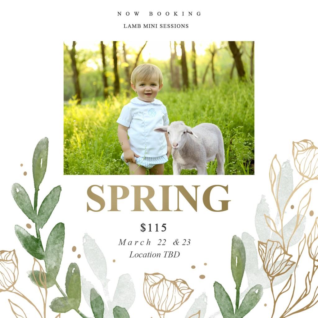 lamb spring mini sessions