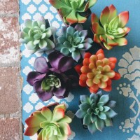 How beautiful are these faux succulents? I love their coloring!