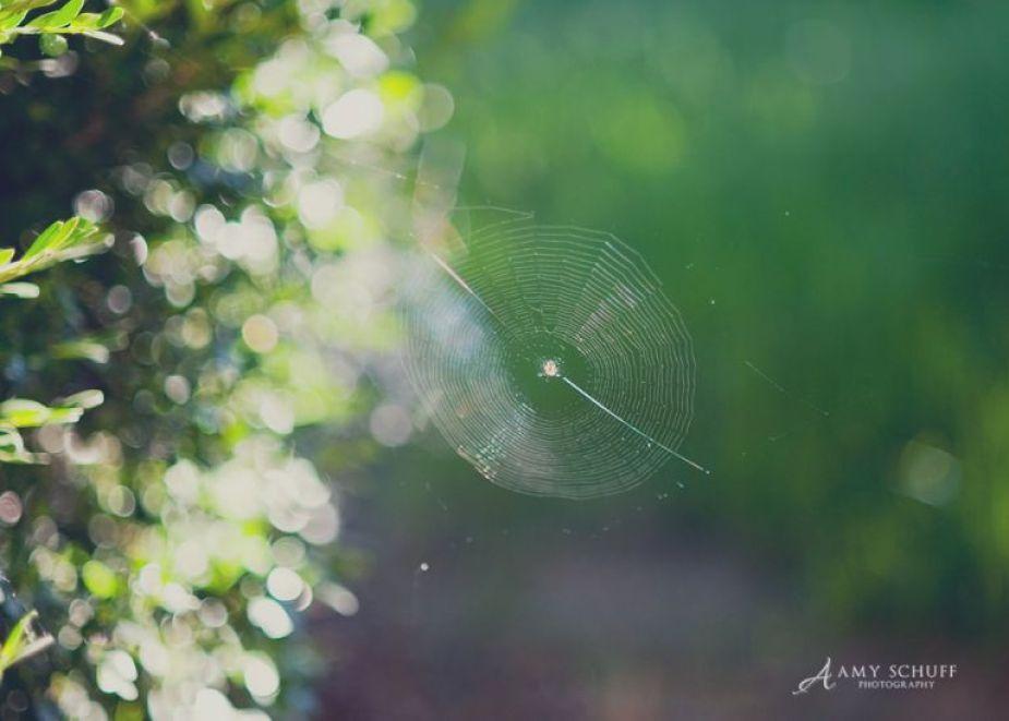 spiderweb_blog
