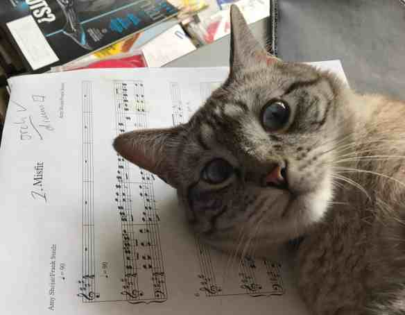 why cats sit on paper
