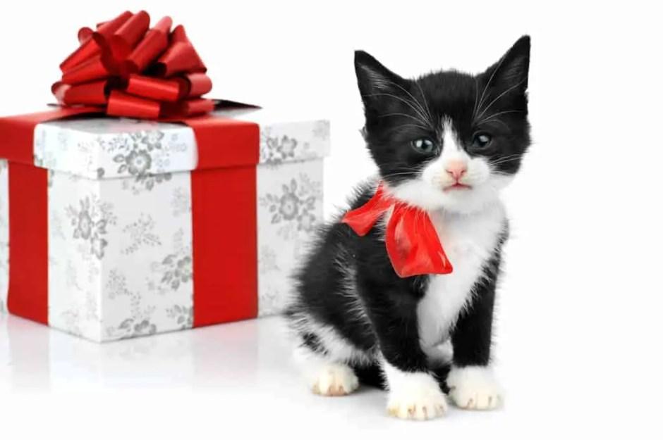 small cute kitten