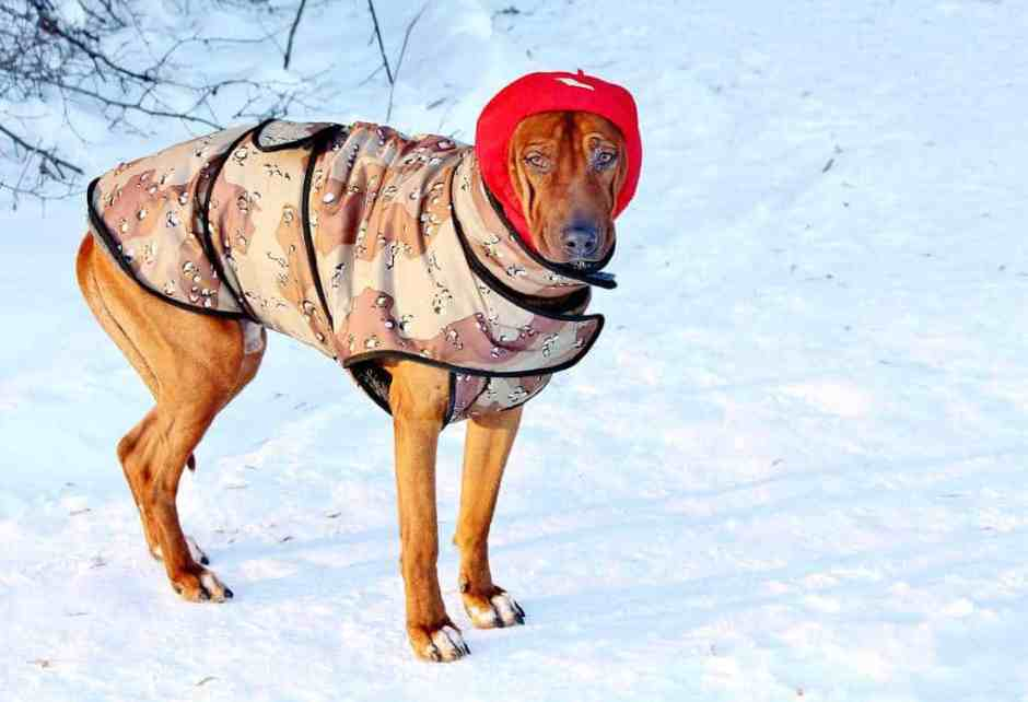 Dog for a walk in winter
