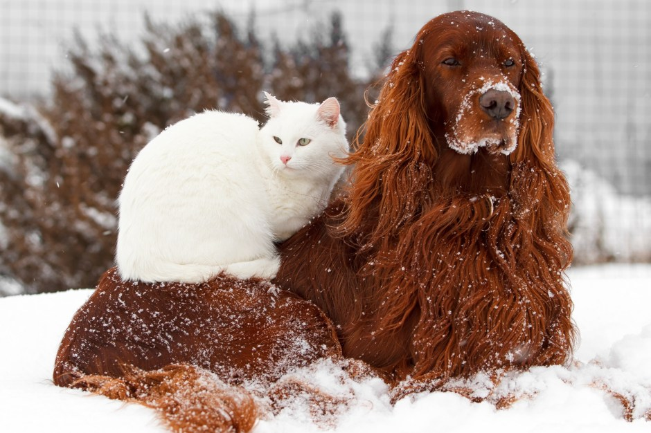 red Dog and white cat
