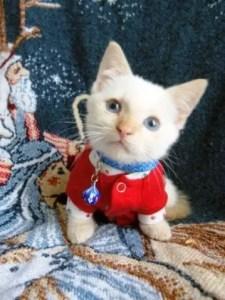 KittenInSweater