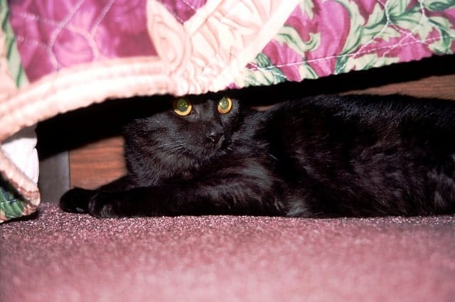 black cat under bed