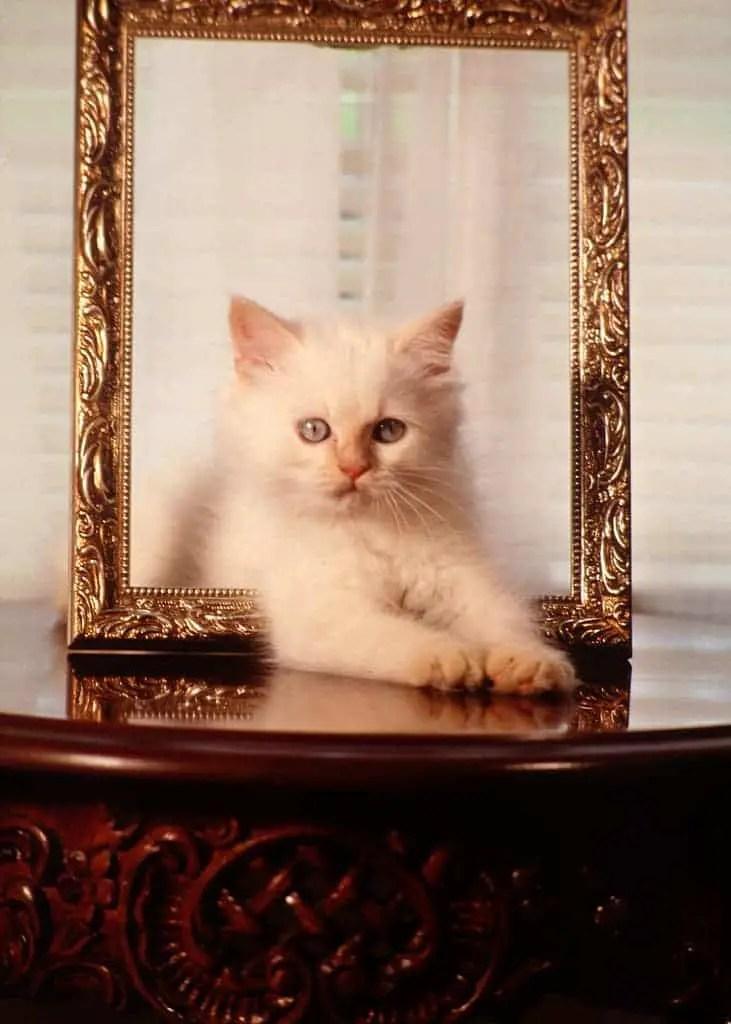 KittenFramed