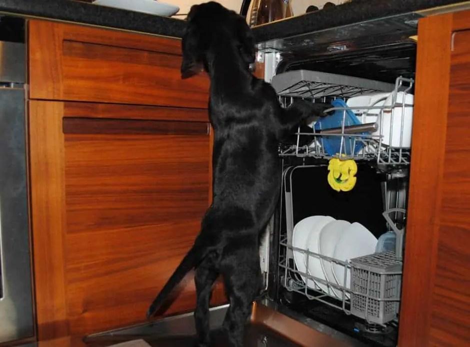 dog in dishwasher