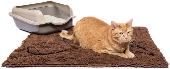 cat inflammatory bowel disease