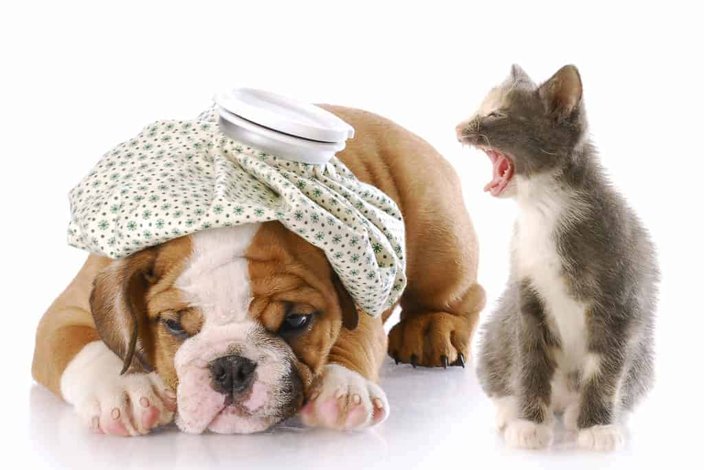 Stop Cat Meowing 6 Ways To Silence Loud Mouth Cats