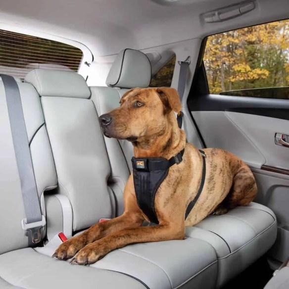pet car safety