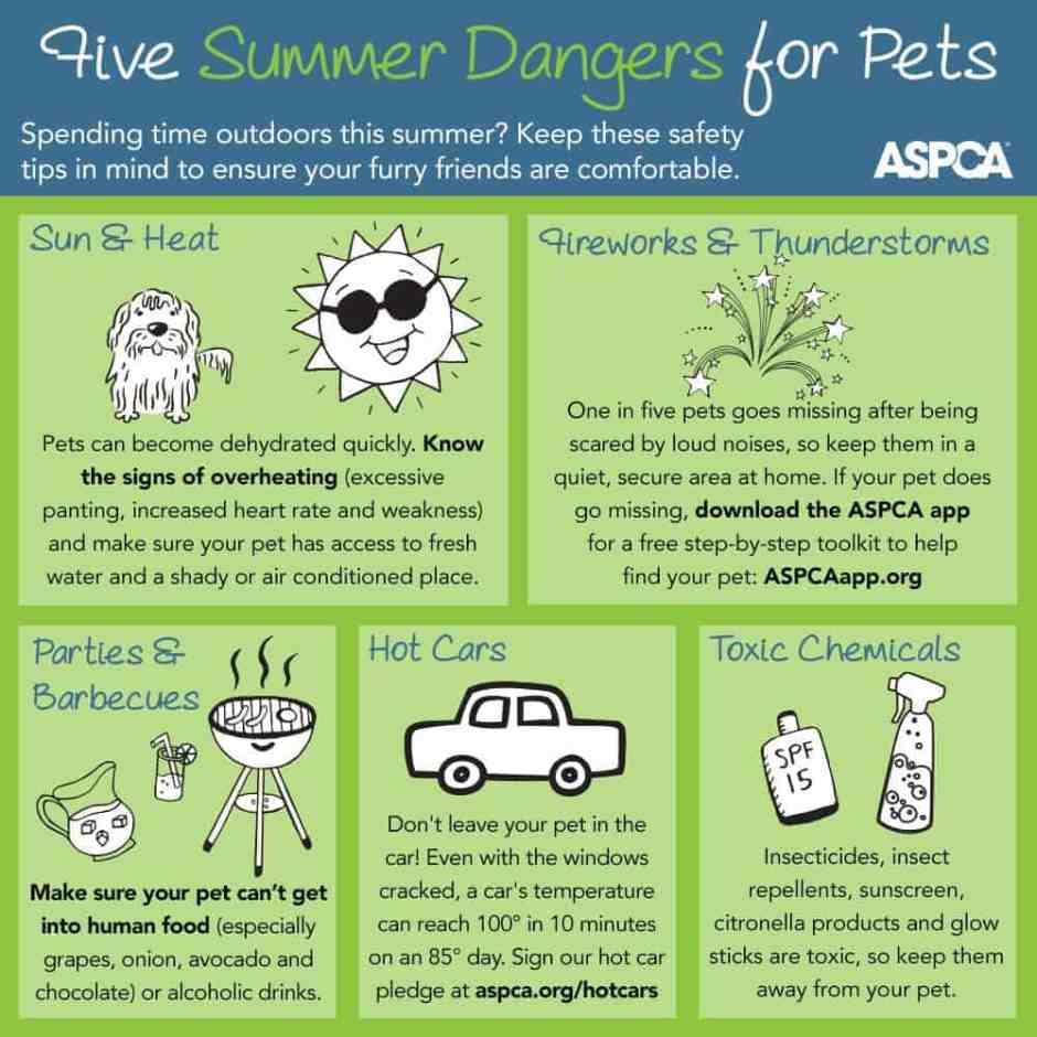 5-Summer-Dangers-ASPCA