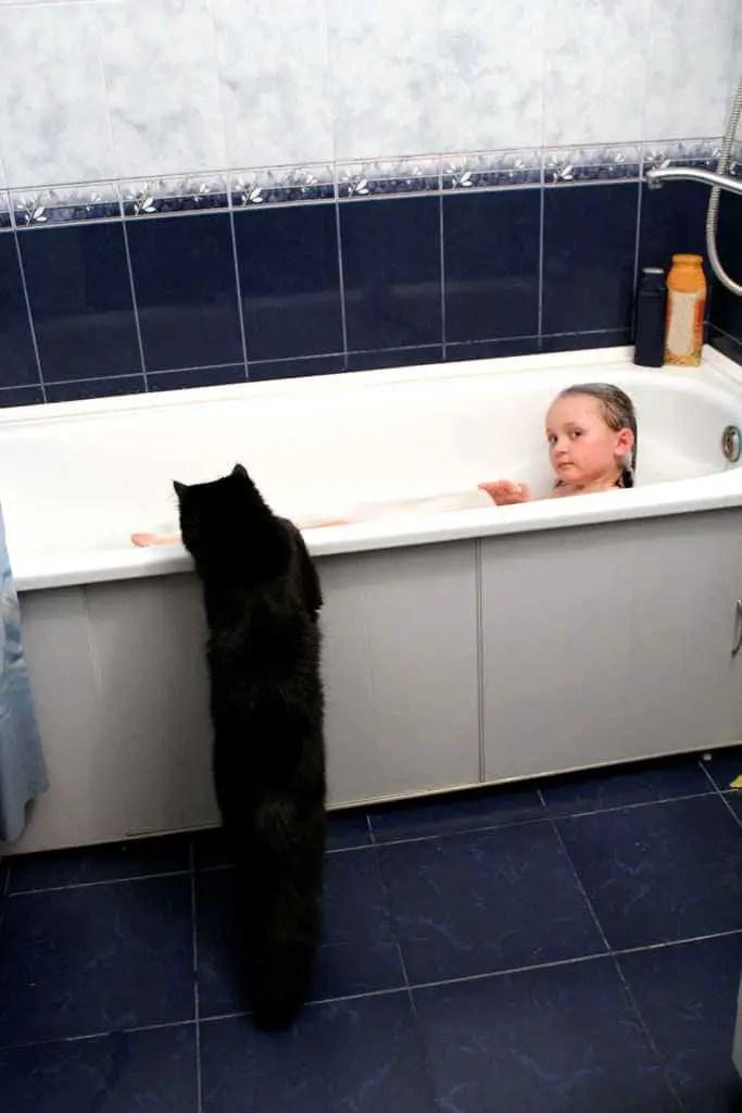 cats bathtub