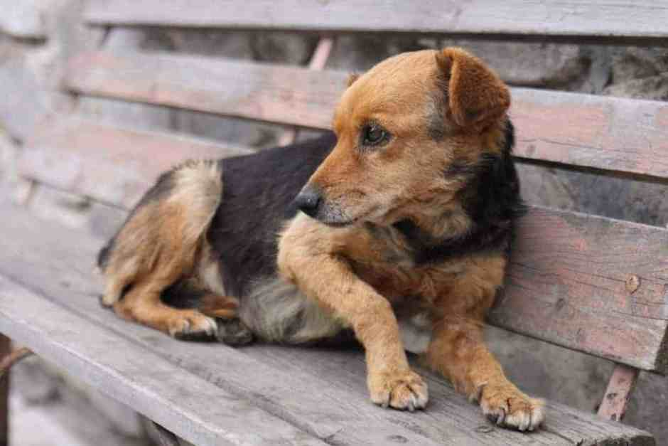 Sad looking lost dog wants to be found