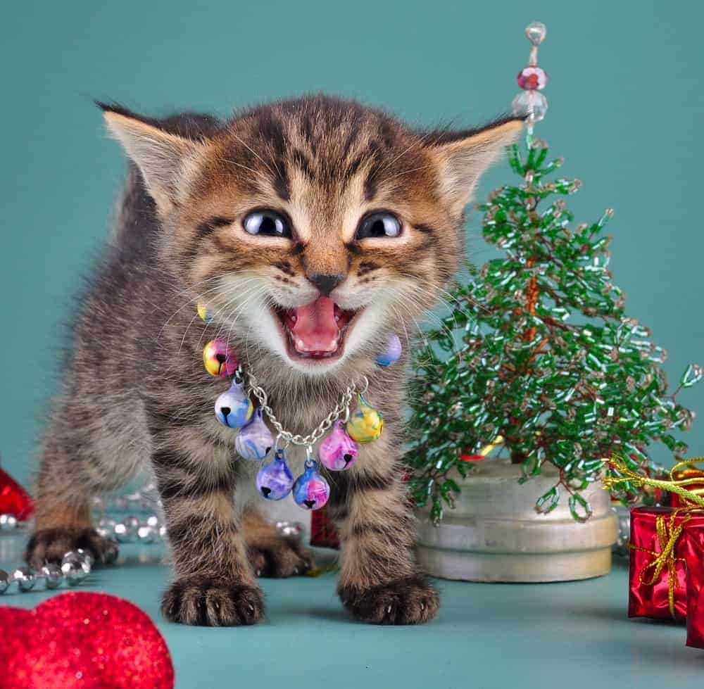 Cat Safe Christmas Tree: Pet Safety & the Holidays