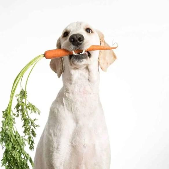 Healthy treats for dog dental health