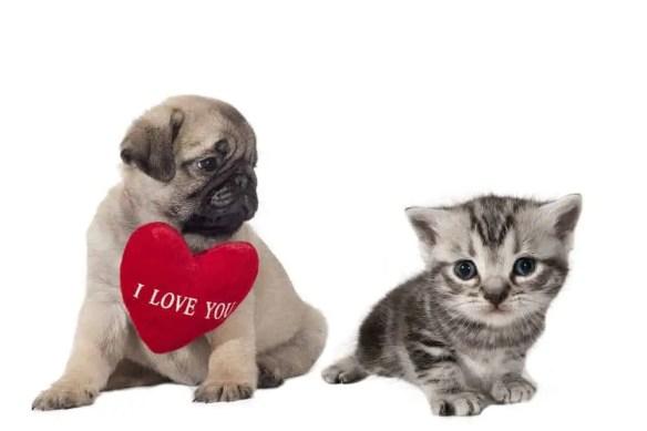 Valentine pets