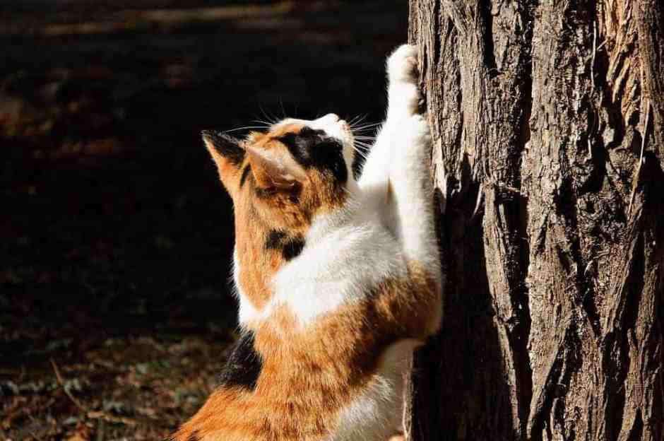 Cat clawing vertical surface