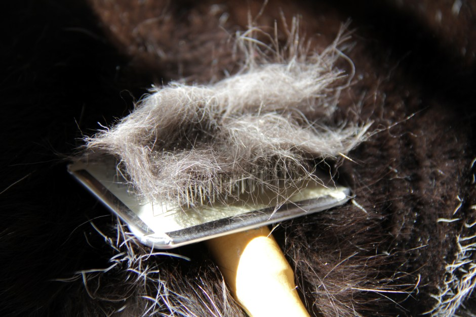 cat hairballs prevented by combing and brushing