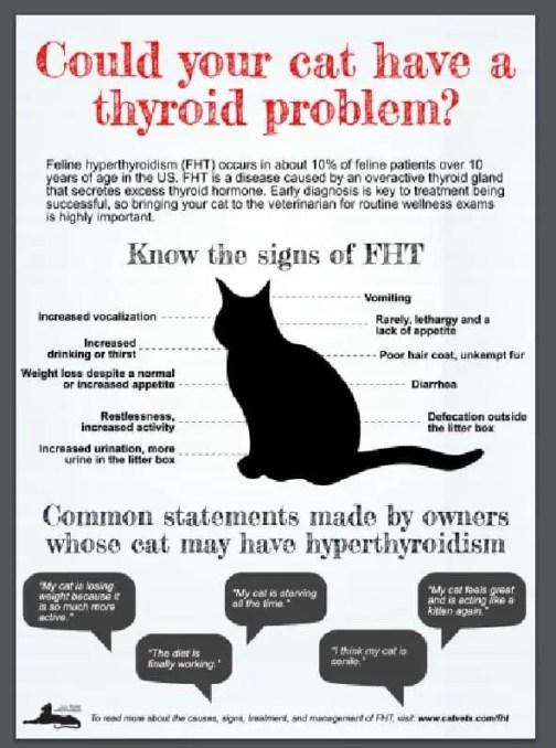 AAFP-Signs of Feline Hyperthyroid